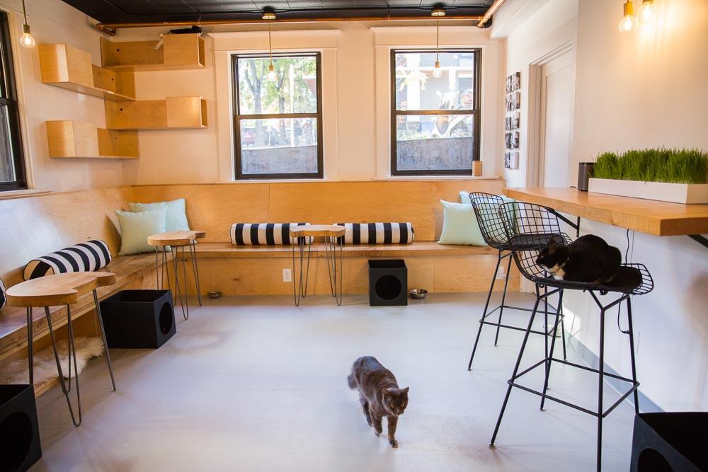 Pratt_Neko Cat Cafe_046.jpg