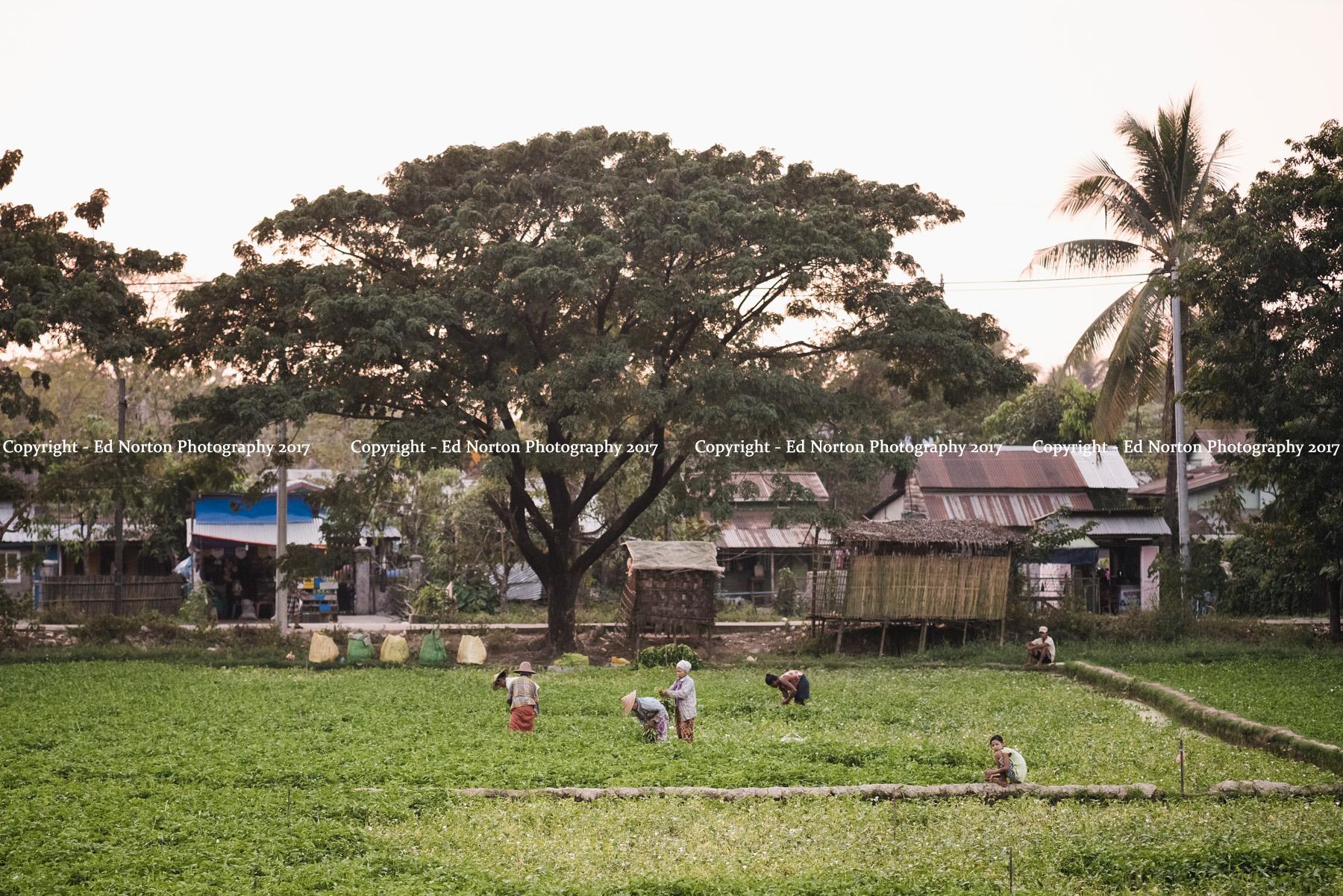 Myanmar 0497.jpg