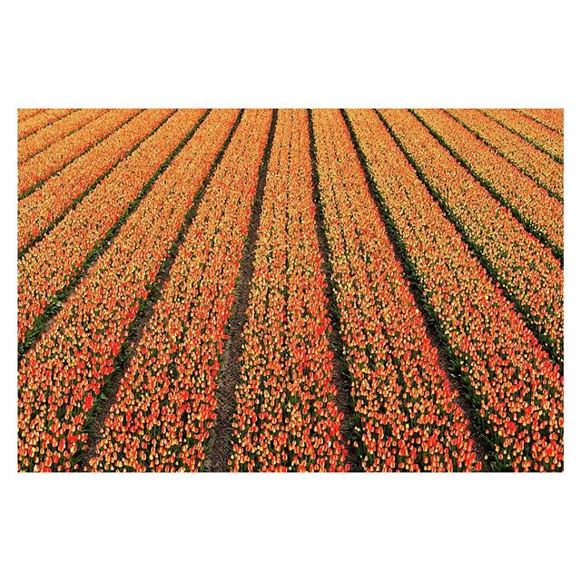 Here's a few photos to brighten up your day. Taken whilst on assignment for Canon in the Netherlands, I pottered about on my lemon for the day in and around Lisse, a famed bulb region.  Rows upon rows, fields stacked to the horizon, bursting at the seams with colour. I've never smelt such fragrant air!  The sun is out now in London, things are starting to get a little warmer. Happy days to everyone ✌🏻 🌷 ☀️