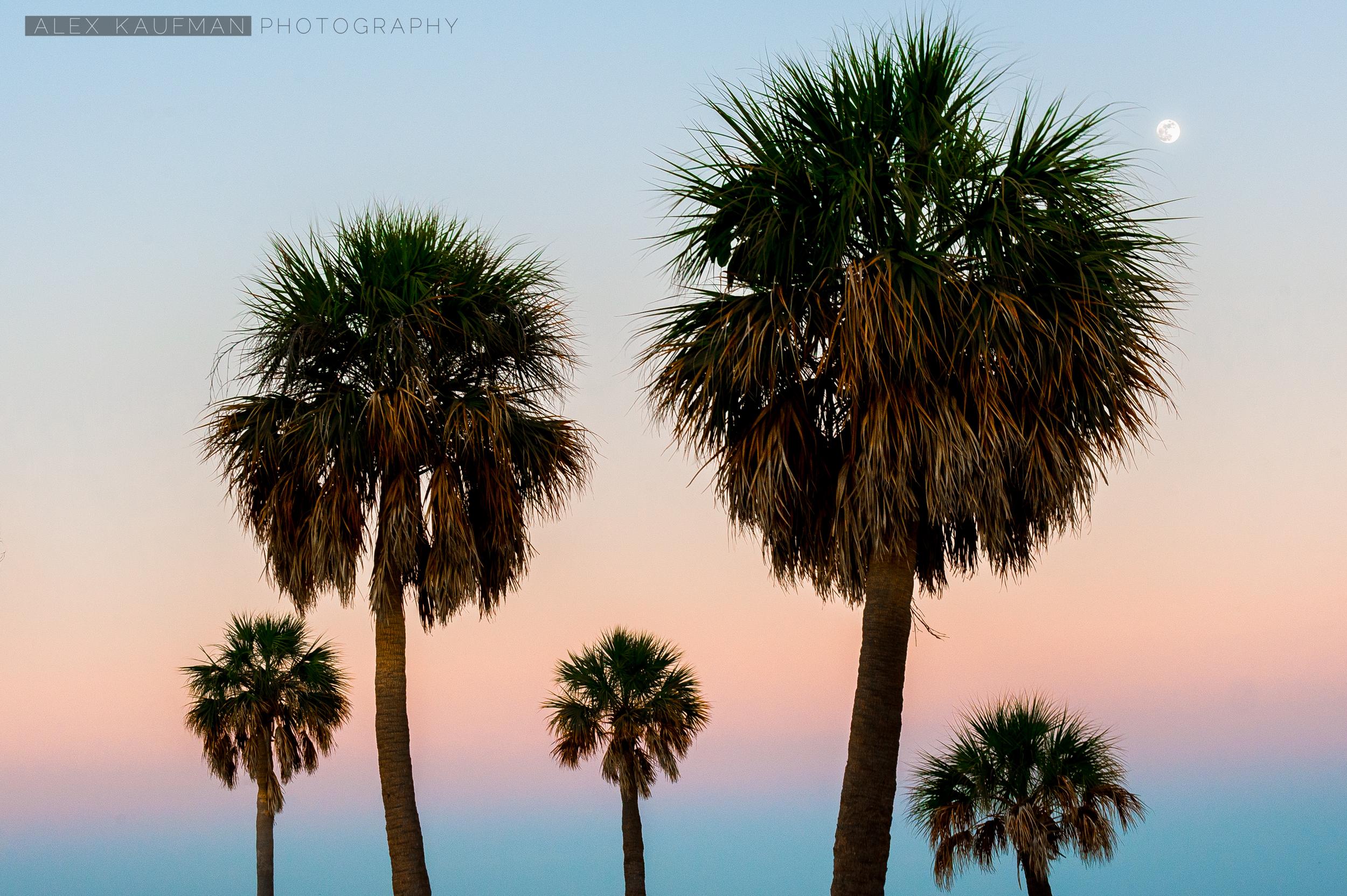 Palm Trees at Twilight