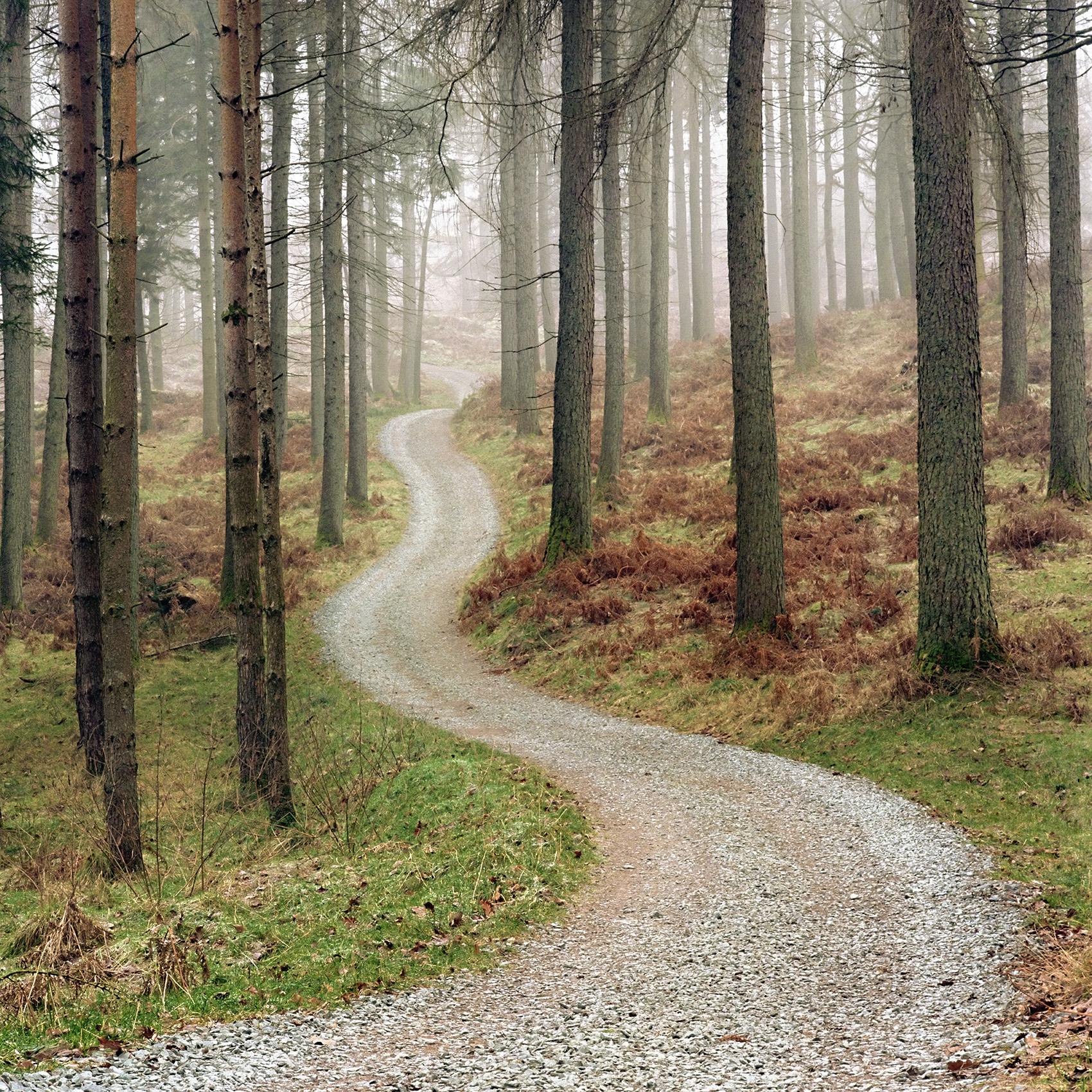lake-woods-path.jpg
