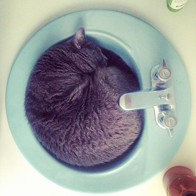 If he fits, he sits.  #kitty in the sink.  #cats #catsofinstagram #catstagram #cat #instacat #instakitty #kittycat #instacats #cute #adorable #love #loveit #kittygram #happy #latergram