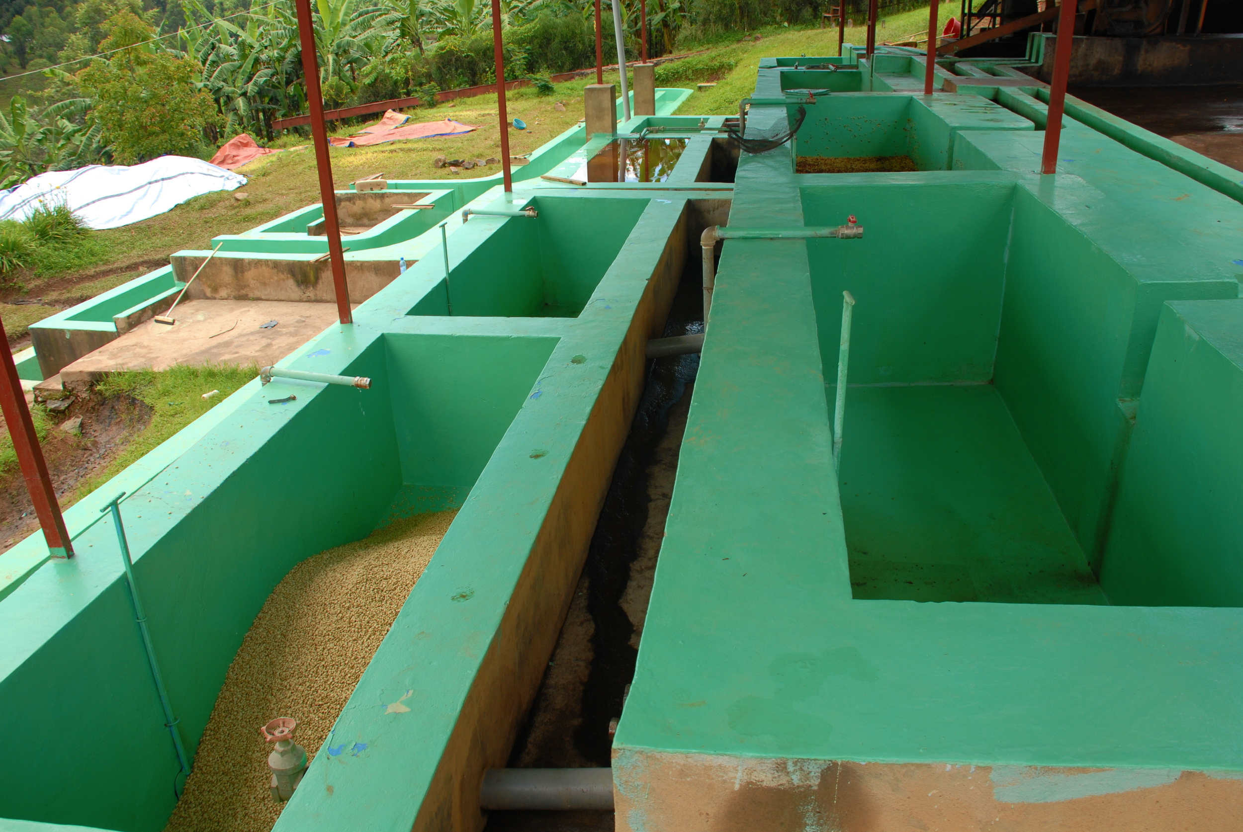 Dry and wet fermentation tanks and washing channels during early harvest: only one of the three sequences used.