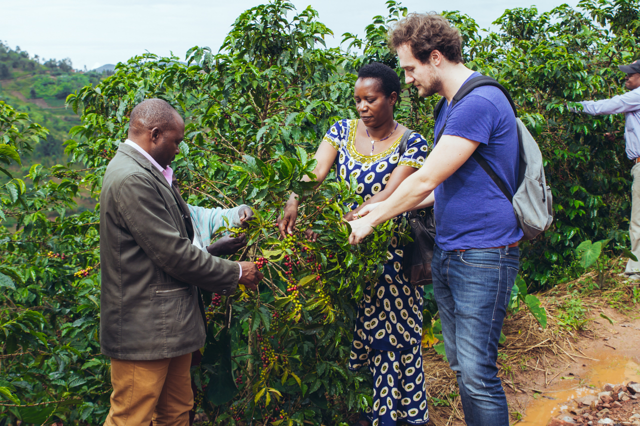 Checking out the bean development with the Twongerekawa cooperative presidents.
