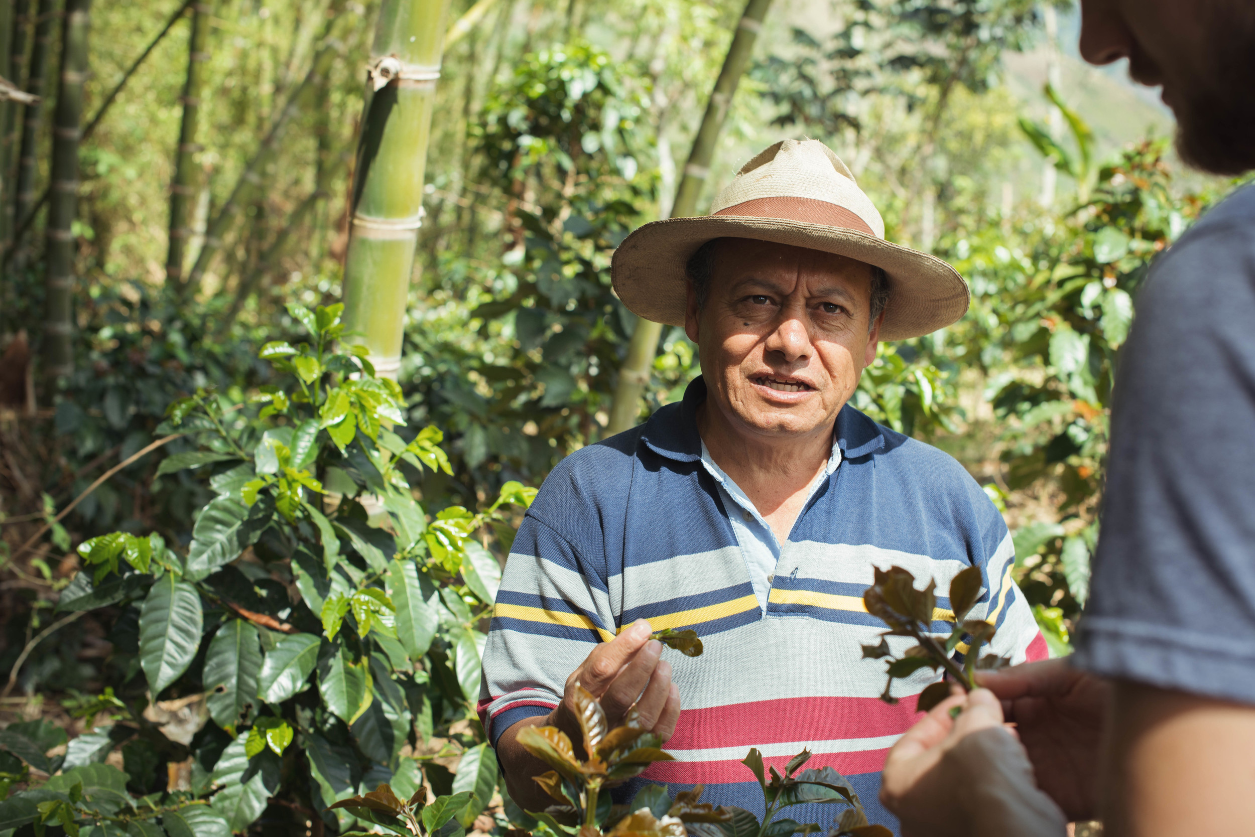 The head of the family, Efrain, explaining how he prunes his coffee yearly.
