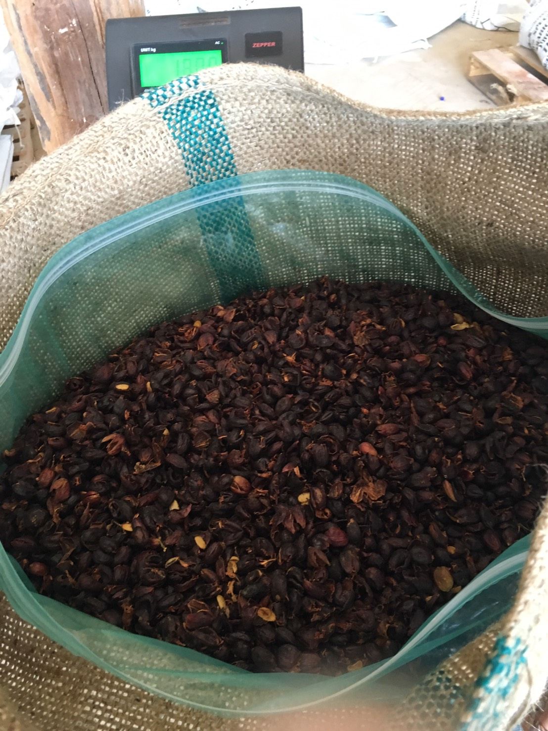 Cascara, the very first trials for export!