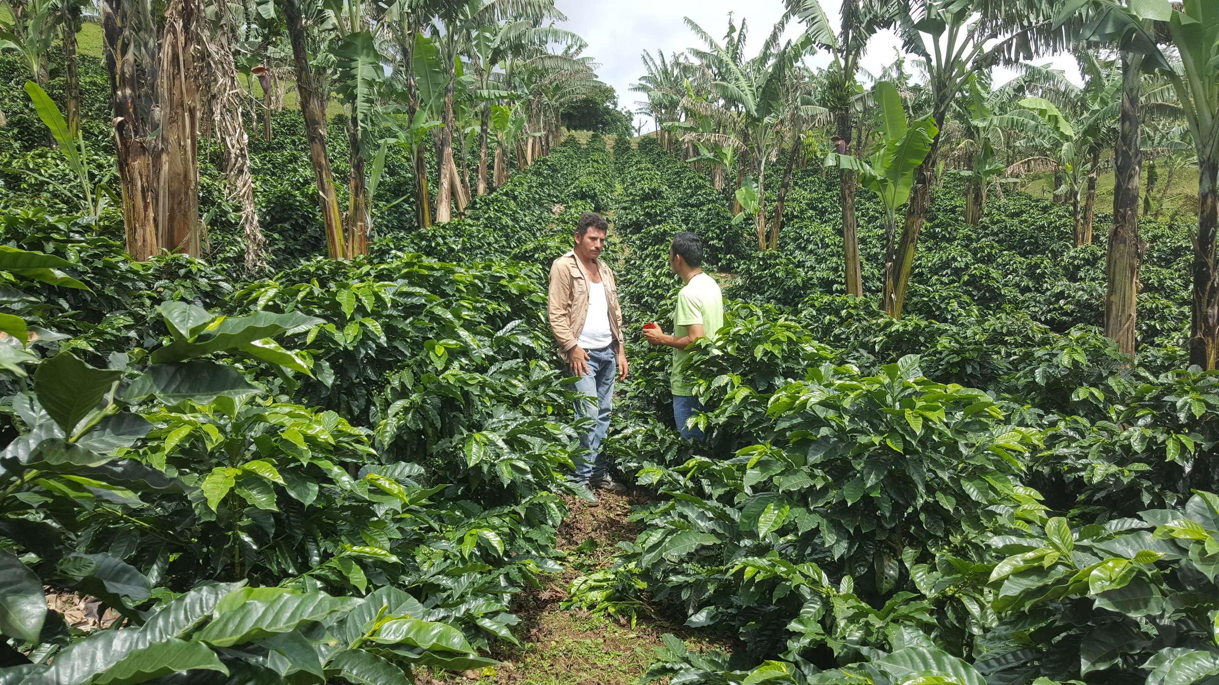 Farmers and farm workers of different areas and farms cooperate closely on these smaller plantations.