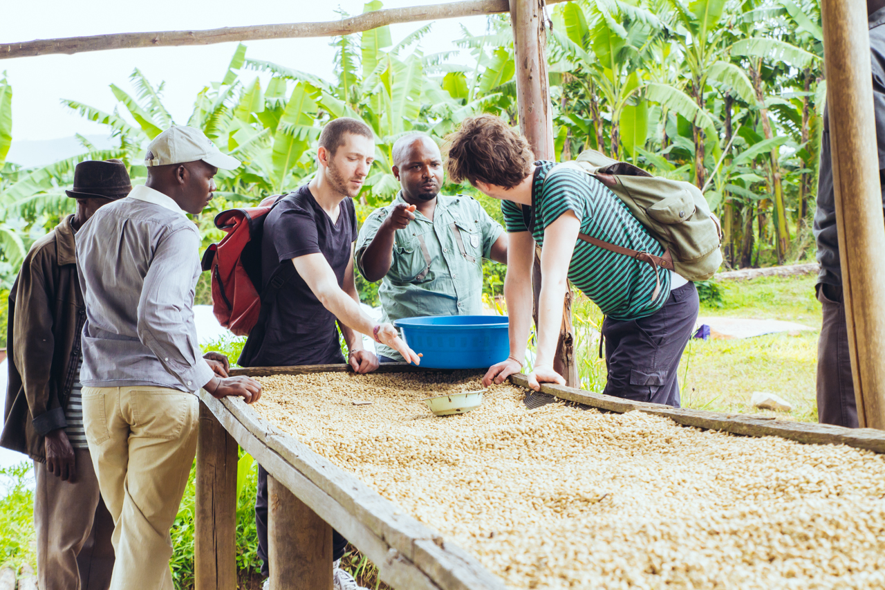 Antoine Kagenza (Rushashi CWS), Oliver Gashema (MIsozi) and roasters (White Label Coffee) talking about Rushashi's carefully phased - shaded then full sun - drying process.