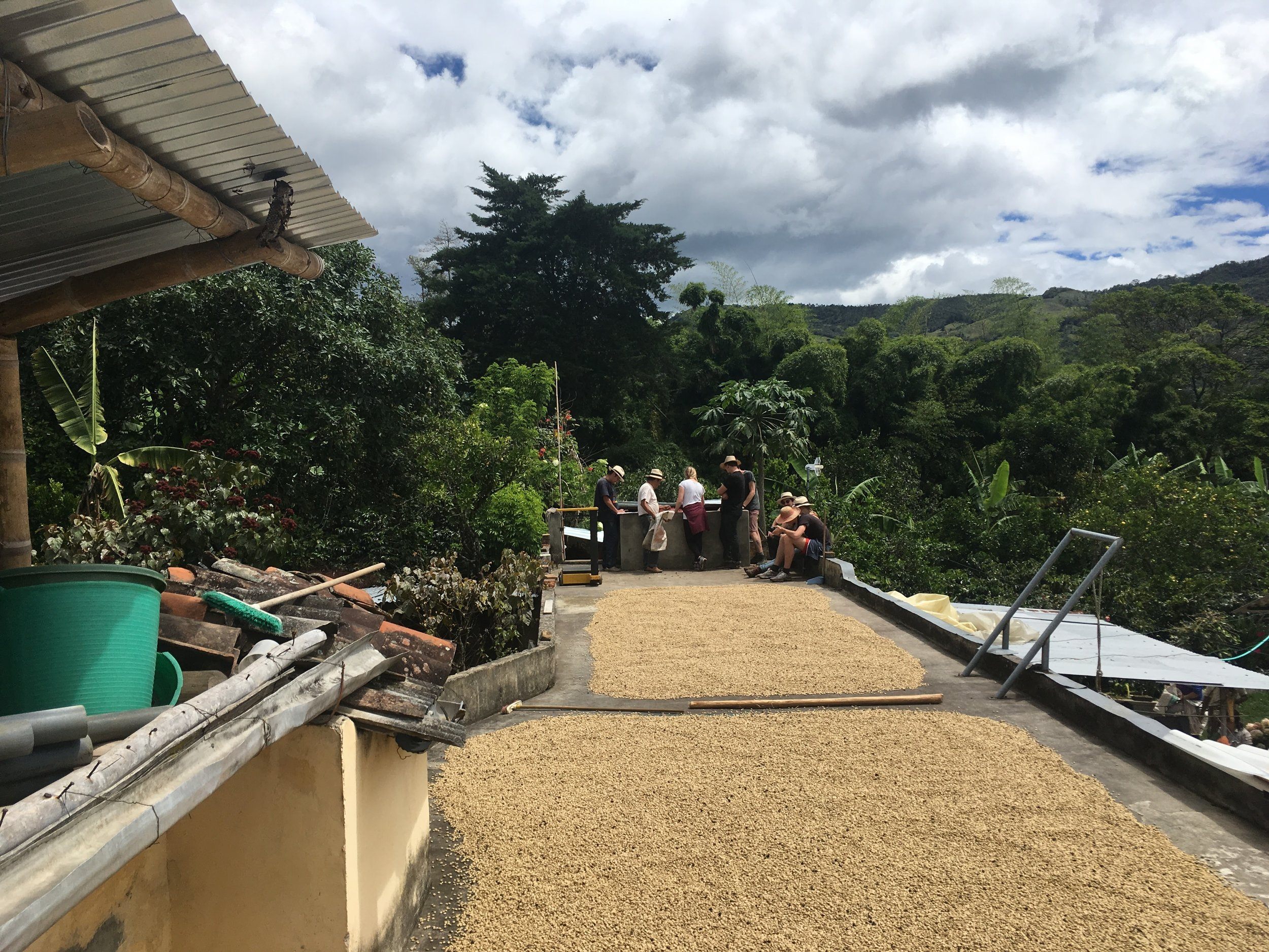 Drying coffee on the roof of the Argote estate.