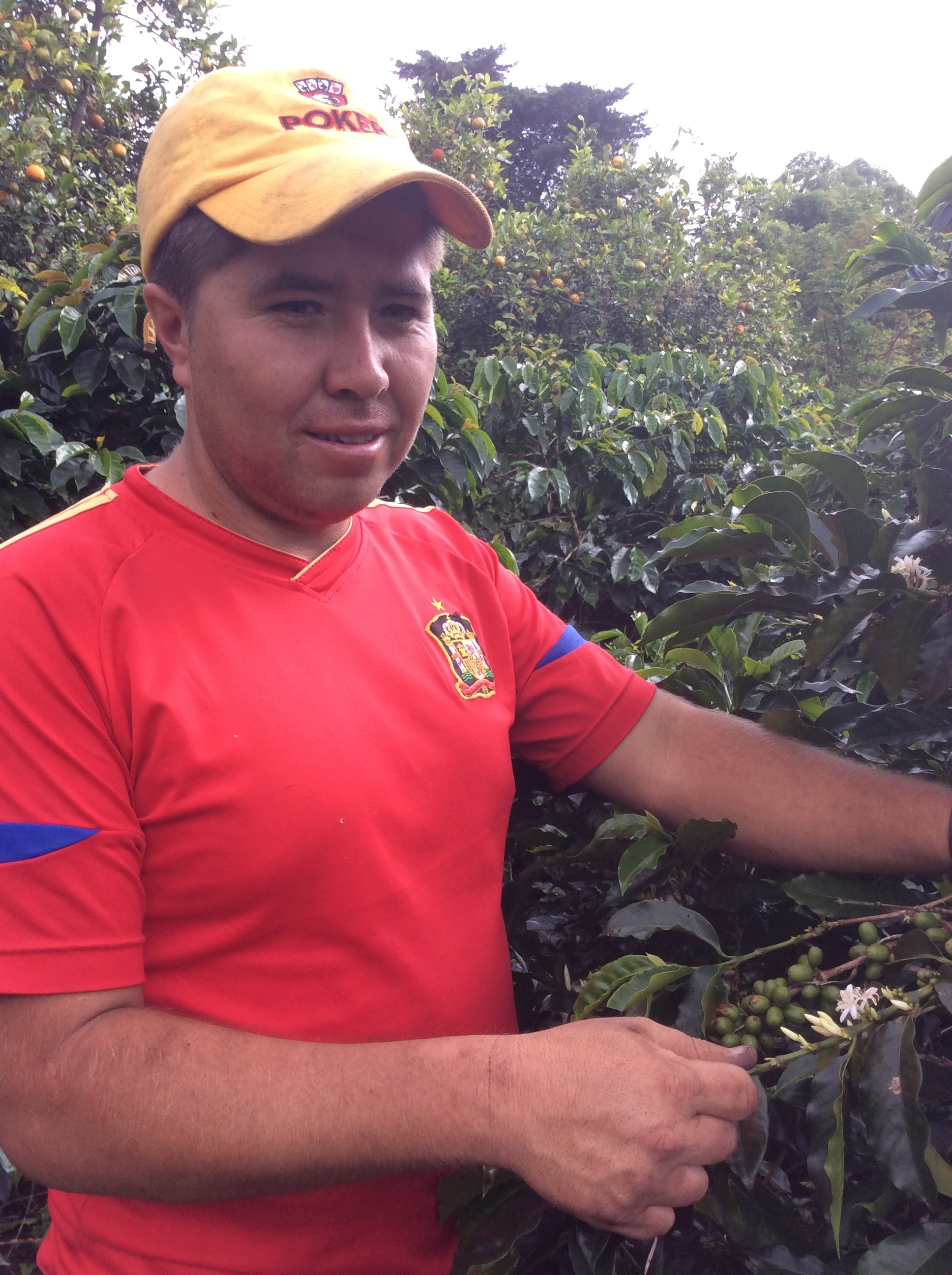 Alfredo's nephew, works in his small coffee property and in the properties of his cousins and in Efraín´s. Together with his younger brothers he cultivates 1 hectare of coffee.