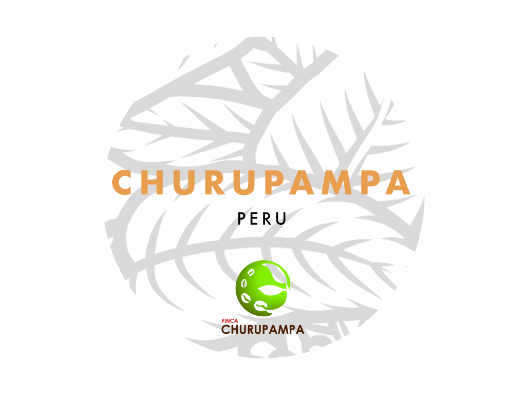 Churupampa 83+ - notes of honey, mandarin, cream. basic espresso with organic certification. our way of working towards buying all our partners' coffee.