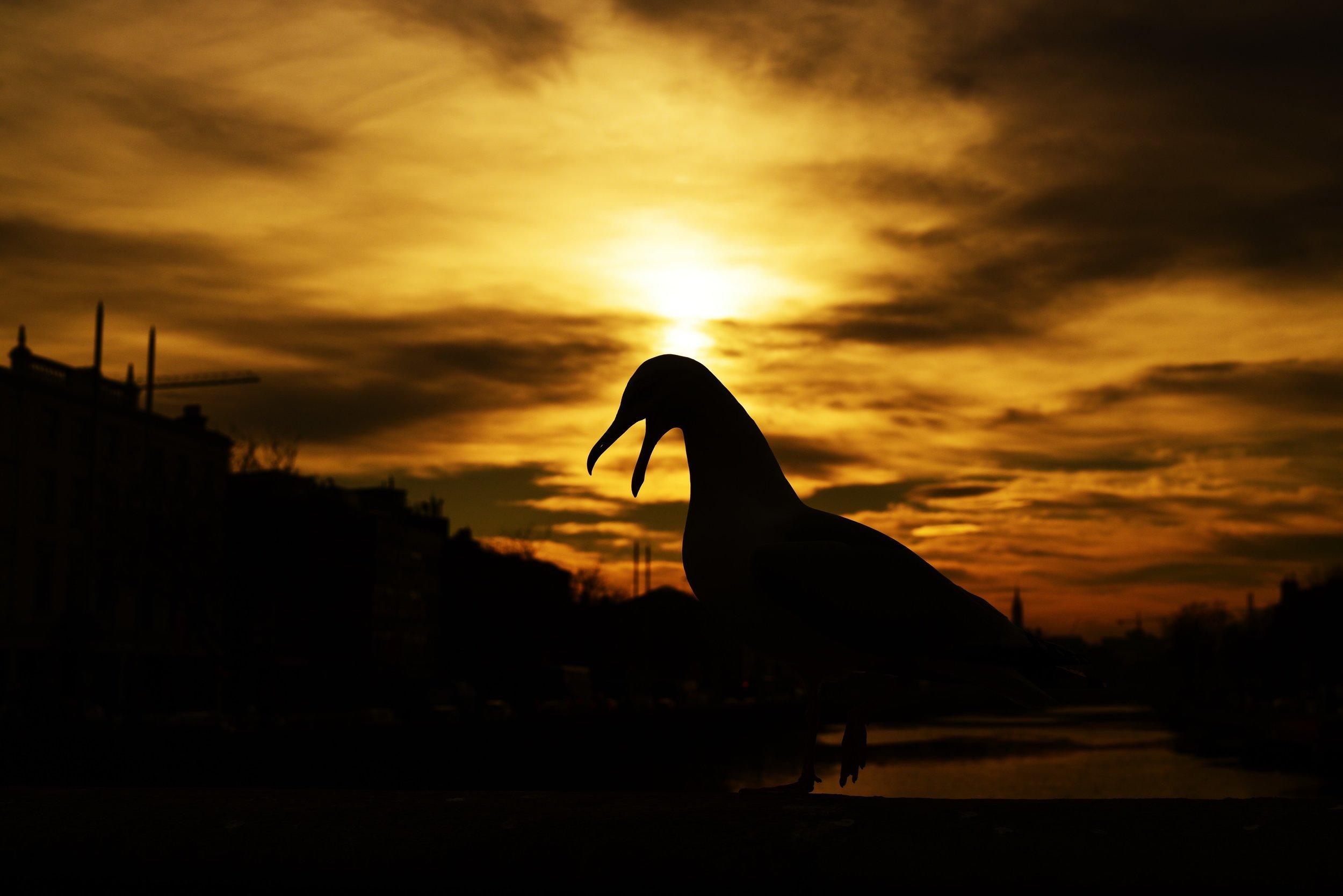 ! a beak gold.JPG