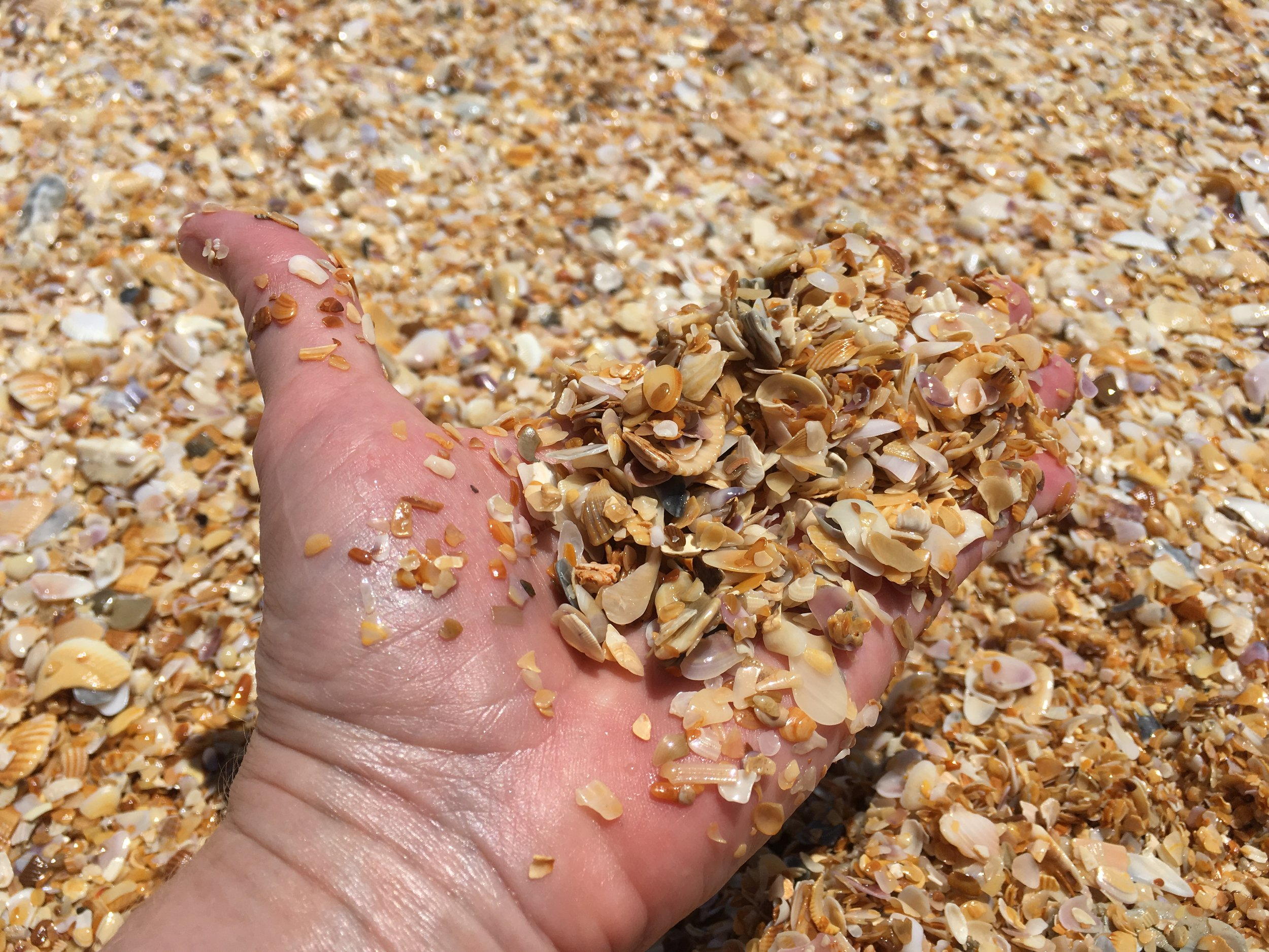 crushed coquina shells instead of sand ... gorgeous!