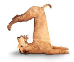 yogadog2.jpg