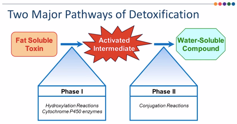 pathways of detoxification.png