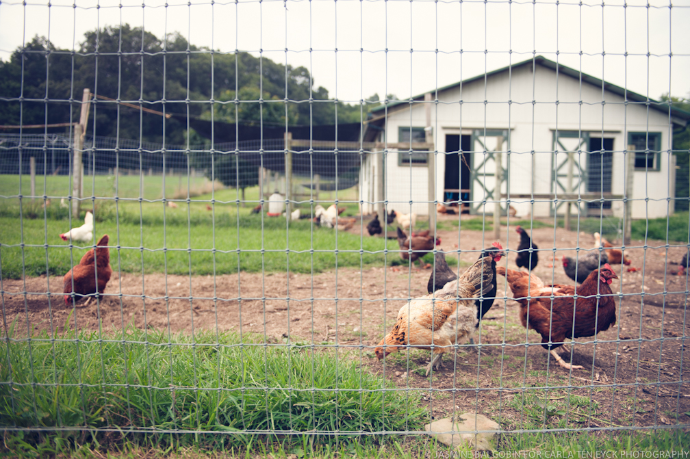 JASMINE_TARA_PHOTOGRAPHY_WHITE_GATE Hens.jpg