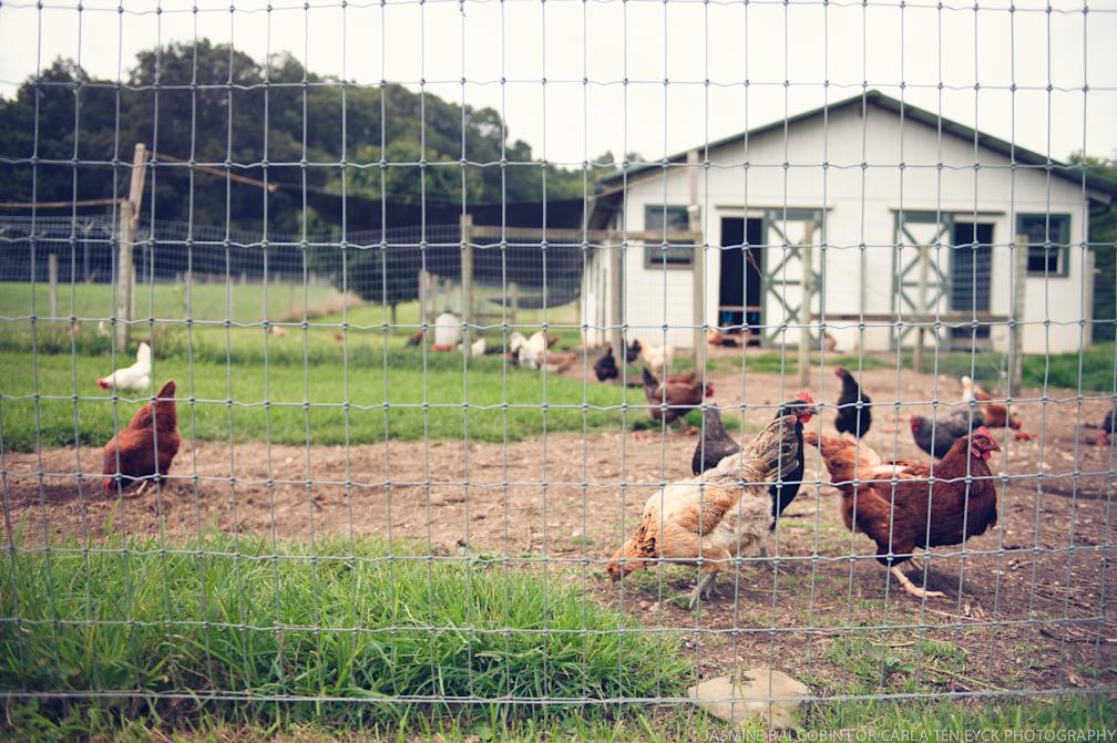 JASMINE_TARA_PHOTOGRAPHY_WHITE_GATE Hens.jpg