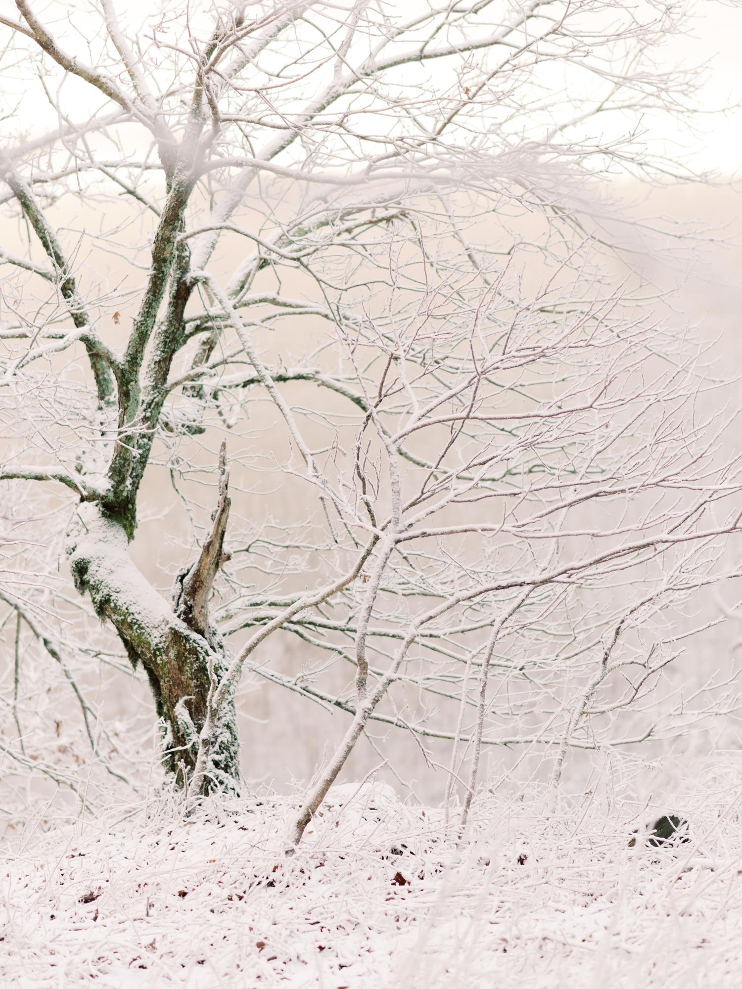 snowy-georgia-proposal-preachers-rock-atlanta-dahlonega-wedding-photographer-hannah-forsberg-fine-art-film-4.jpg