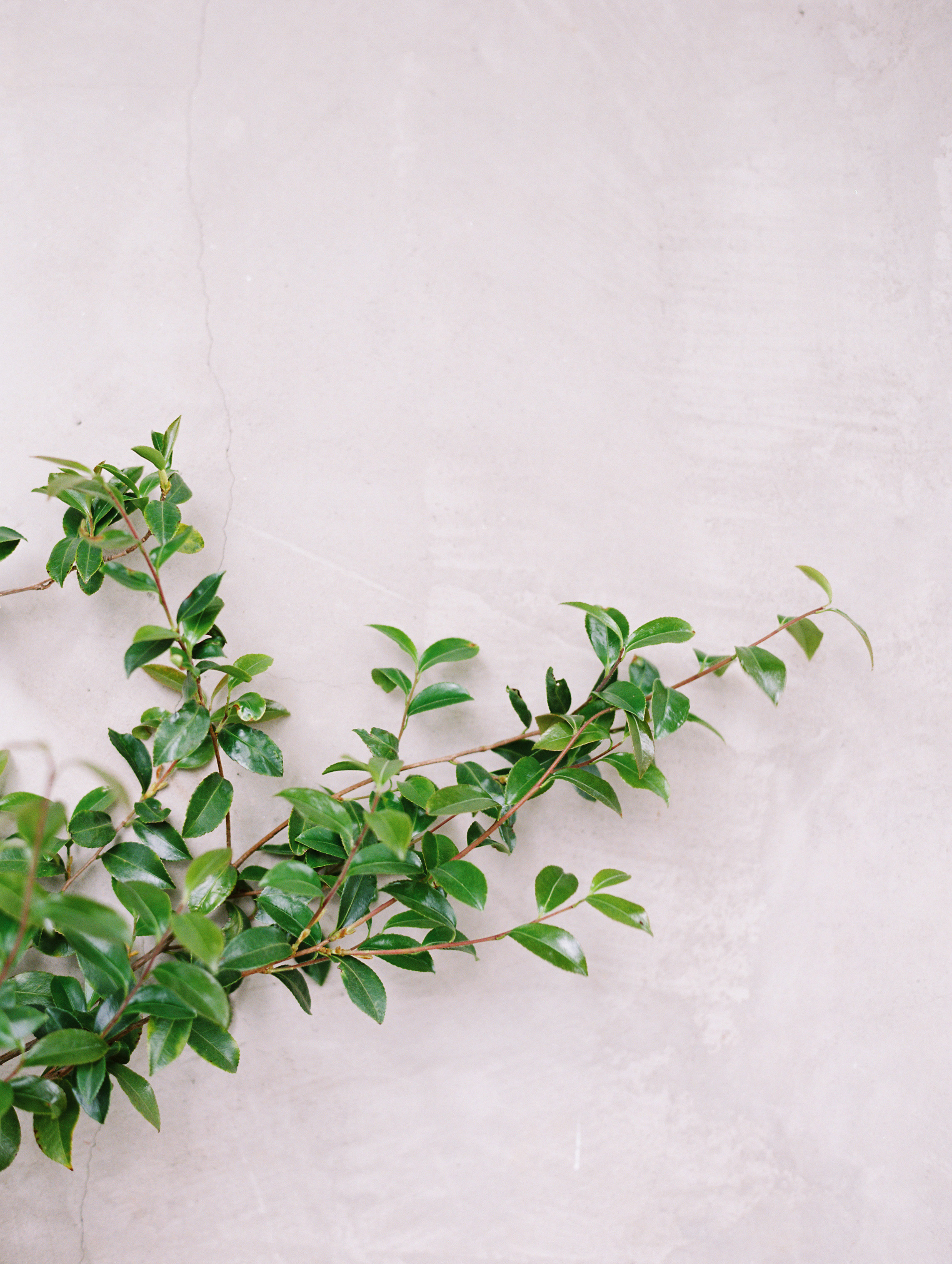 Romantic-Summerour-studio-wedding-hannah-forsberg-atlanta-wedding-photographer4.JPG