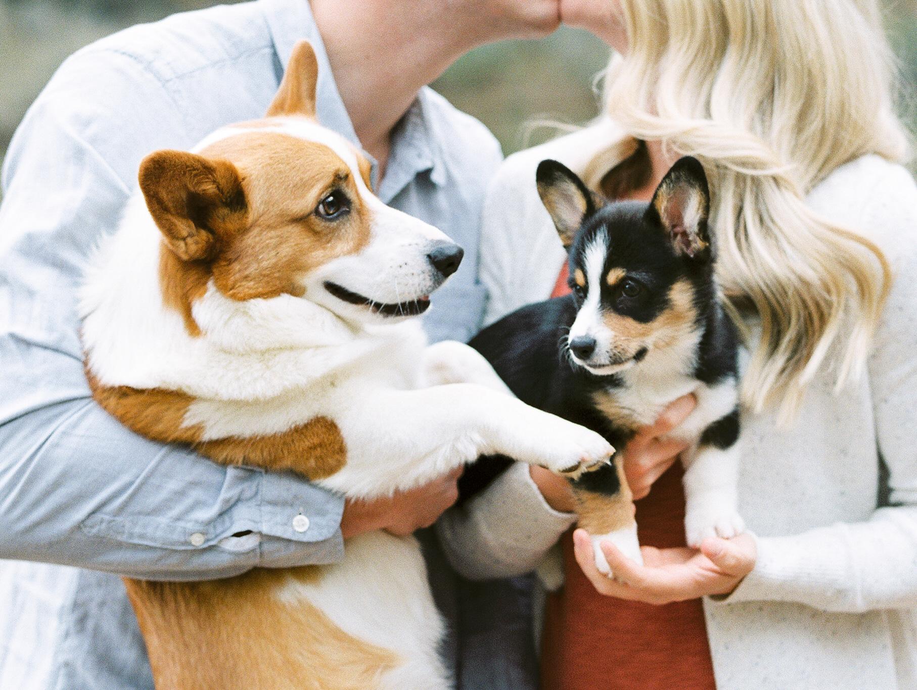 Atlanta-park-family-session-with-puppies-hannah-forsberg-atlanta-wedding-photographer129.JPG