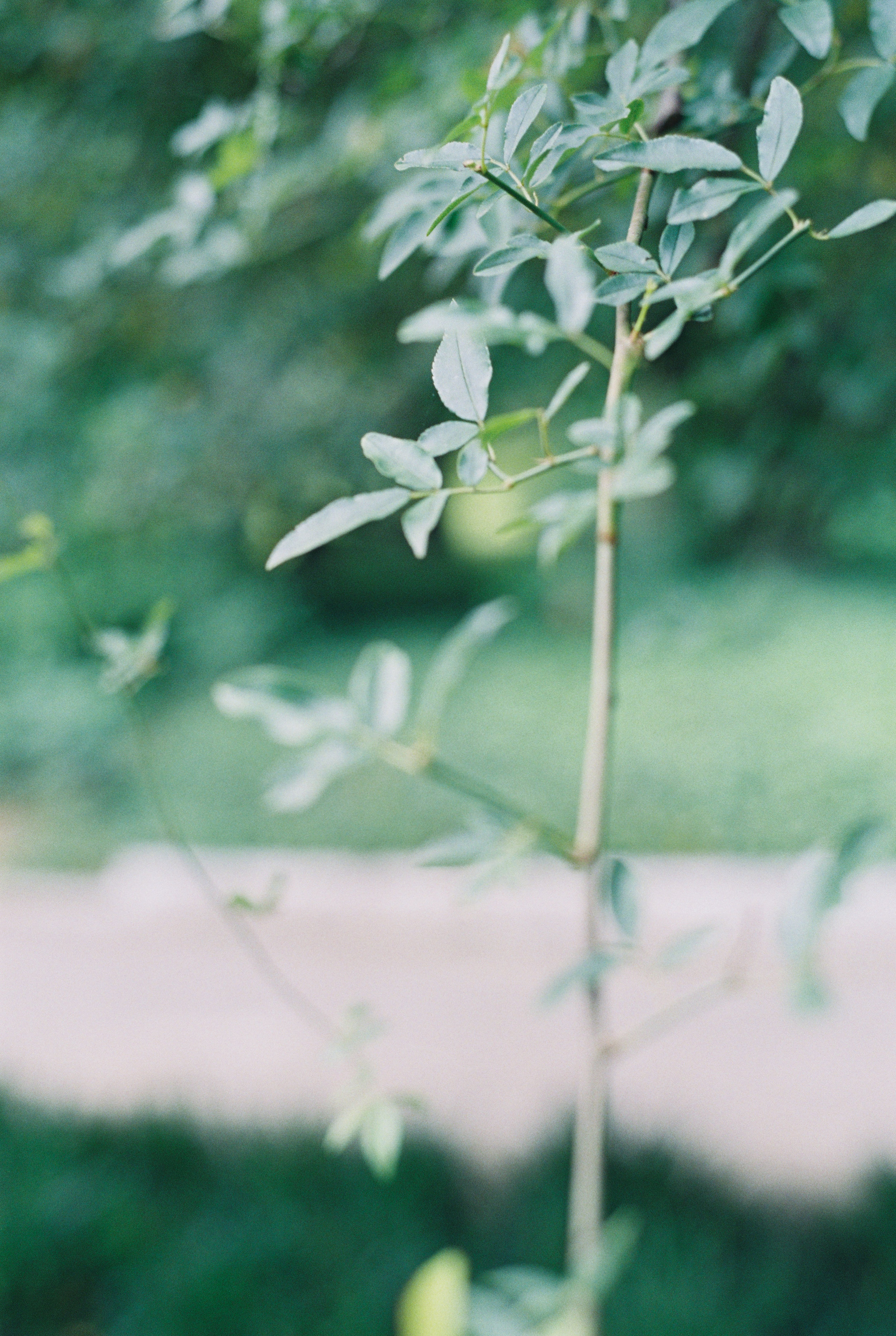 Cator-woolford-gardens-wedding-photos-atlanta-film-wedding-photographer--11.jpg
