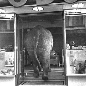 Name The Elephant In The Room