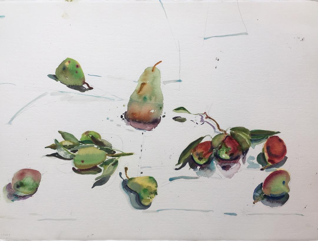 Pears , 1992 watercolor on paper, 22 x 30 inches