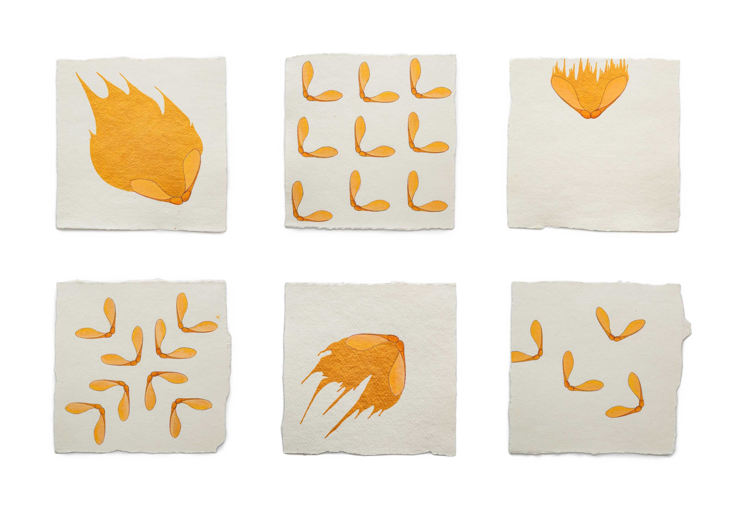 "Fire Diary (maple pods),  2019 Acrylic on paper, 6"" x 6"" each"