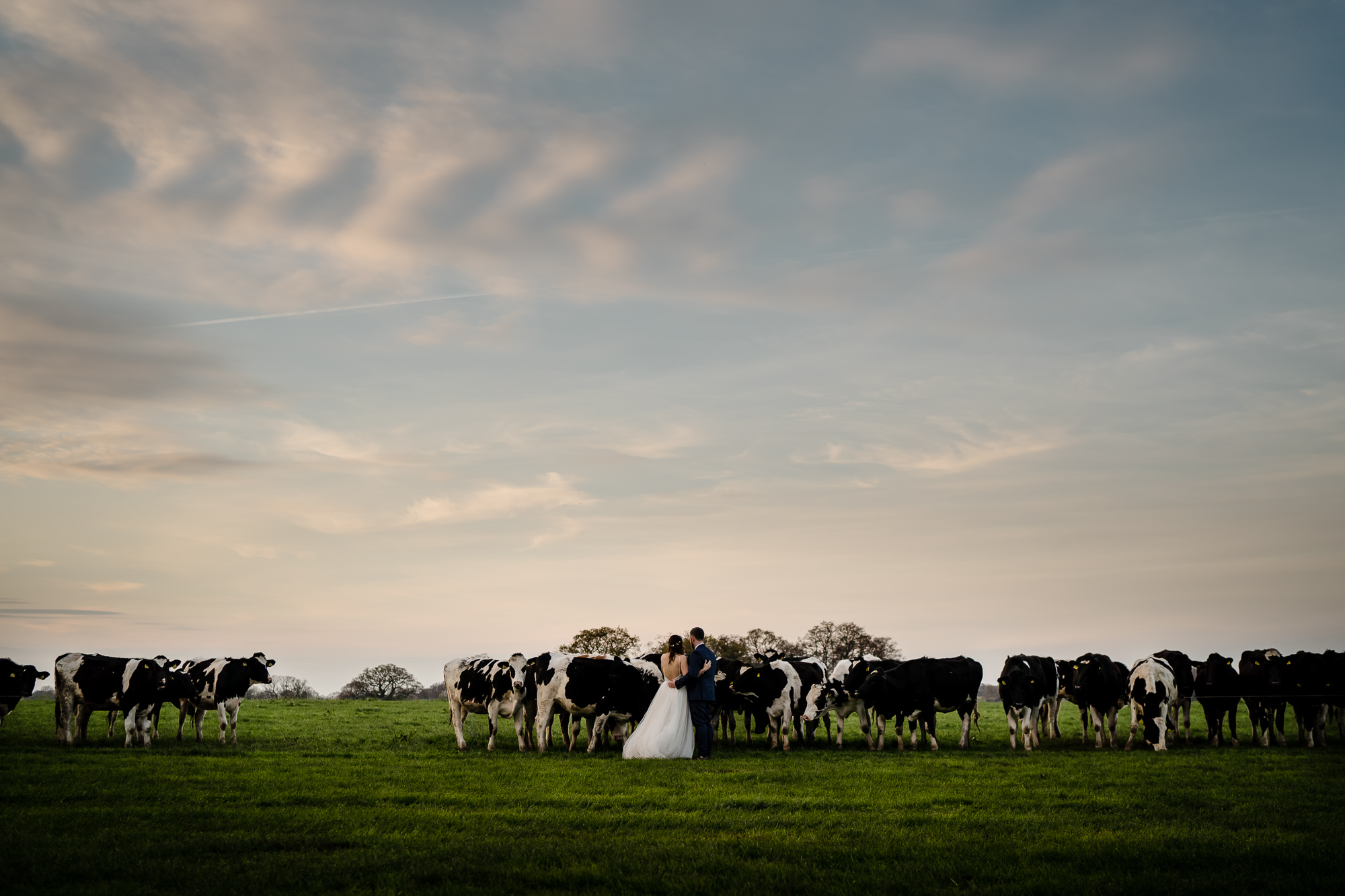 Rustic farm wedding in cheshire with real cows on a working farm in a barn halmes chapel (87 of 97).jpg