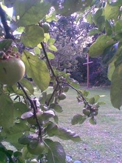 pl_2009_jardin_001.jpg