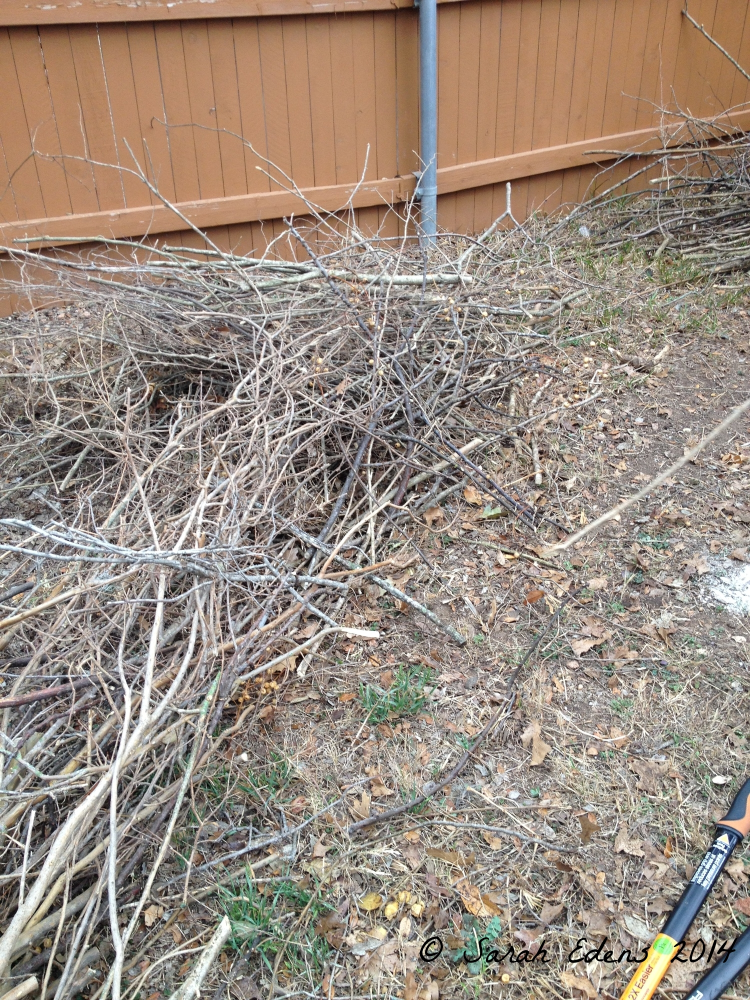 More sticks collected for the bed!
