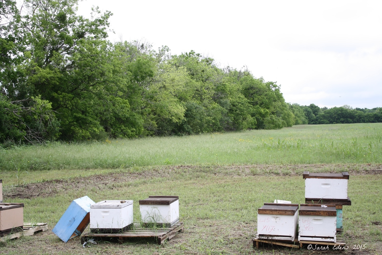 Bee Hives at Gretchen Bee Ranch!