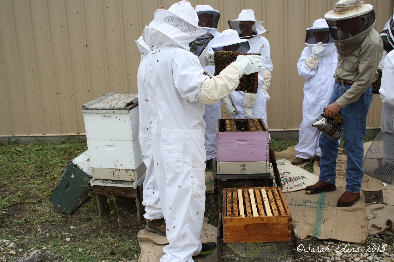 Putting the hive back together