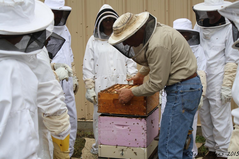 Putting honey super back