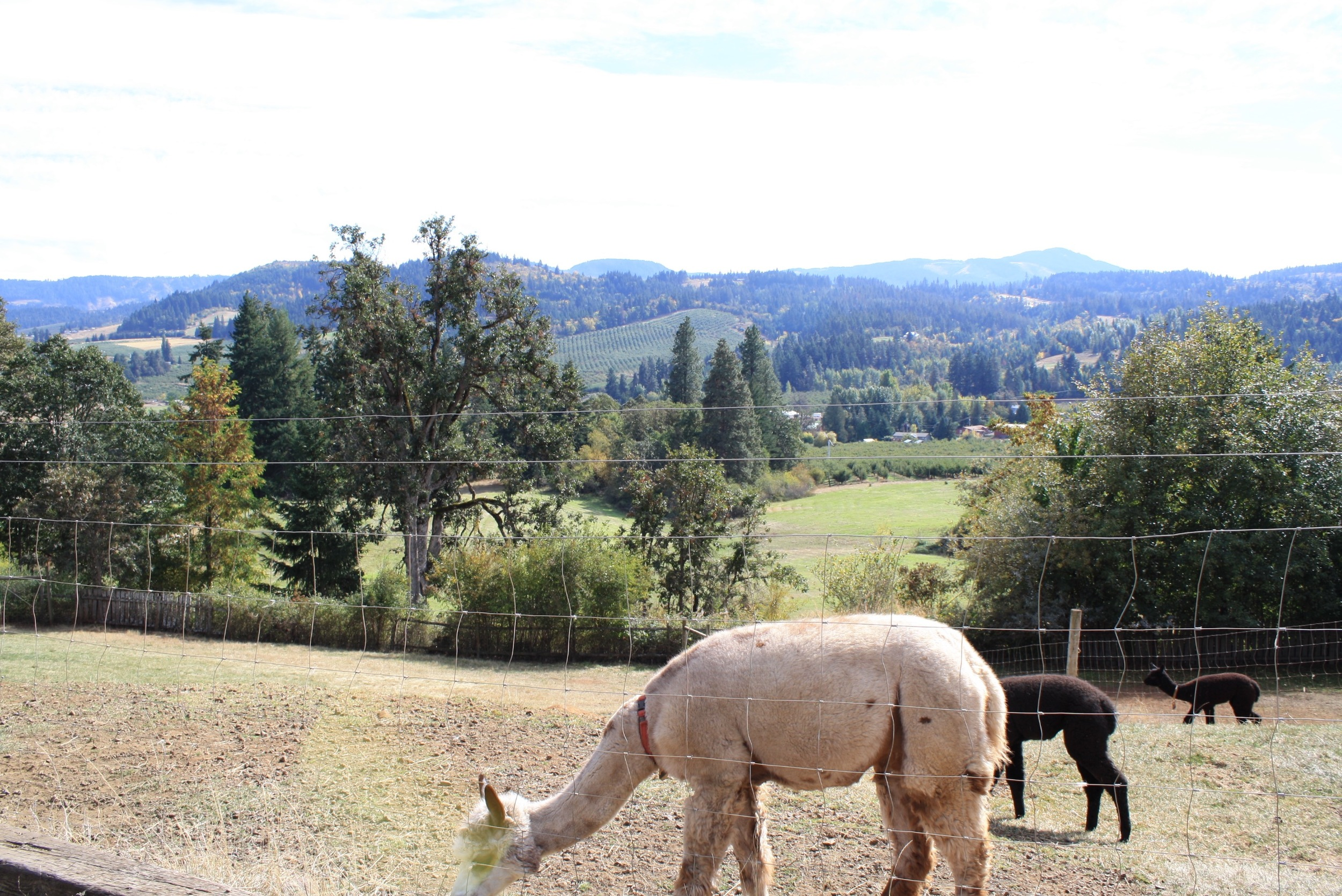 Pasture with a view