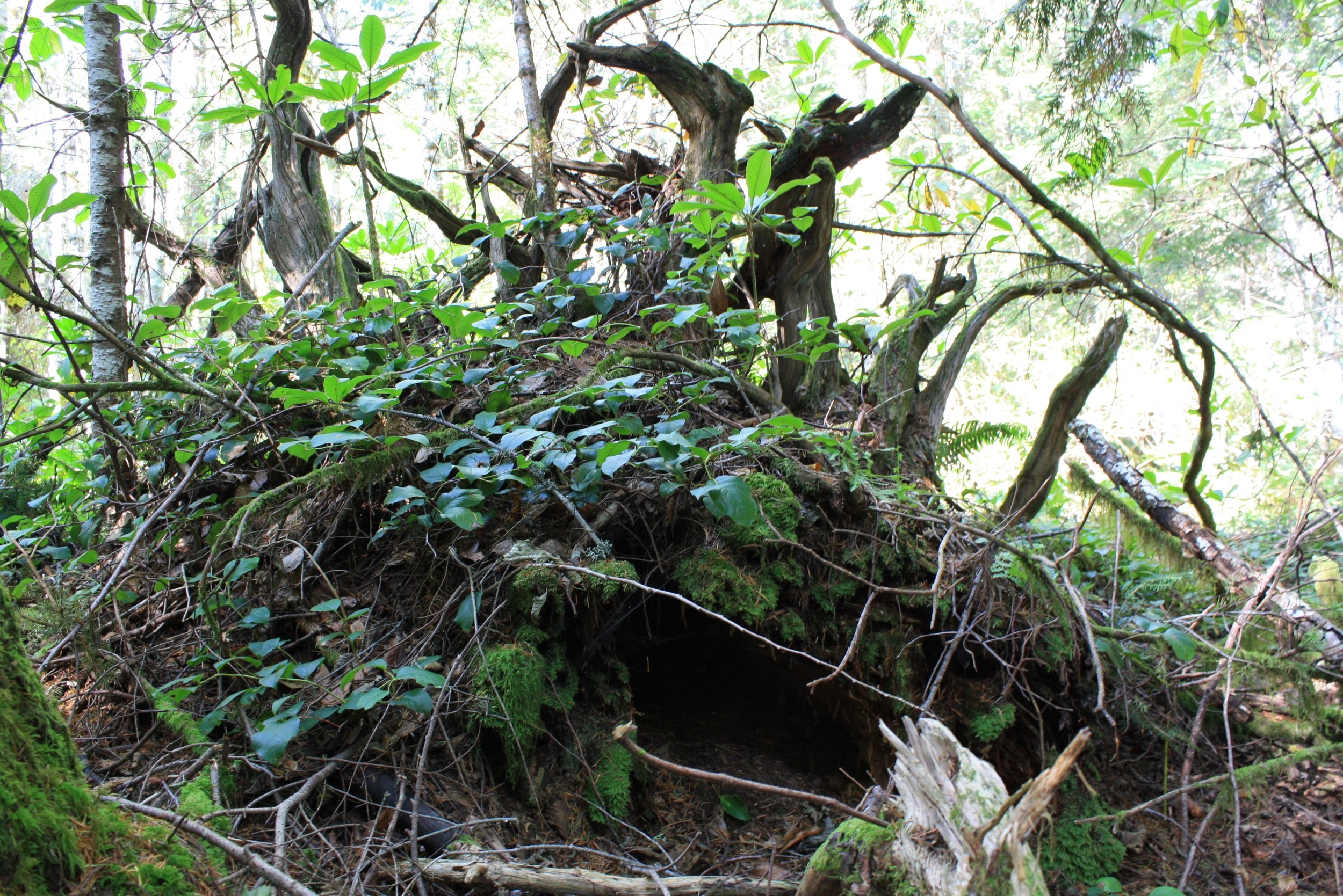 Plants found opportunities everywhere, such as on this uprooted stump