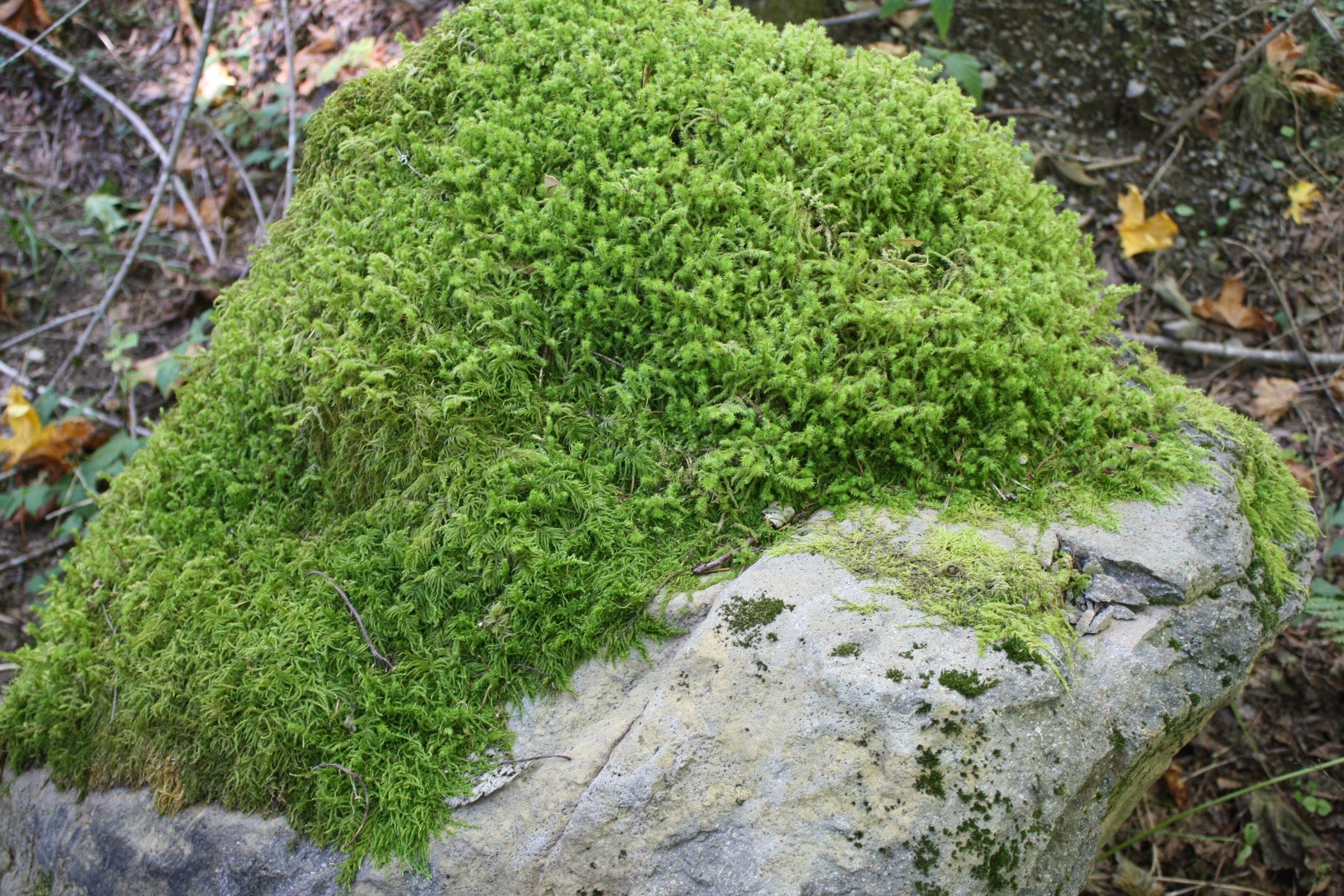 Loved this leprechaun-green moss!