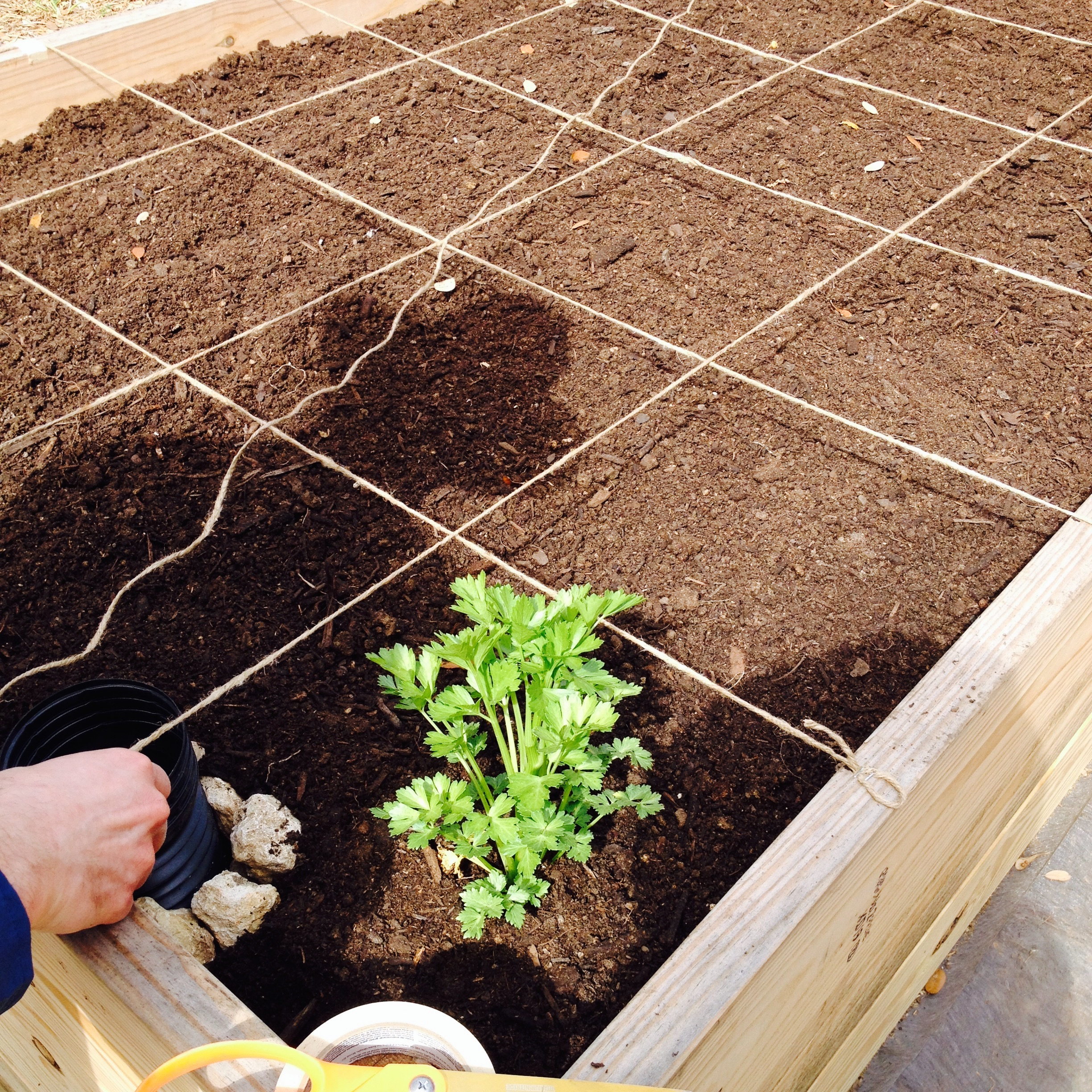 Filled with dirt, ready for square-foot gardening