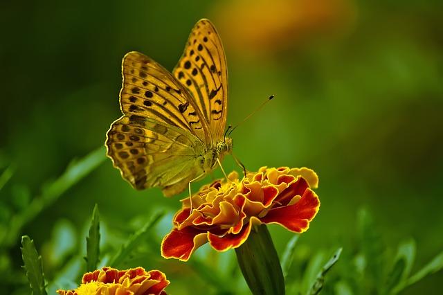 butterfly-1829404_640.jpg