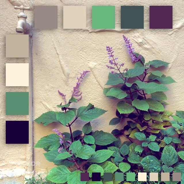 CP - Purple Haze.jpg