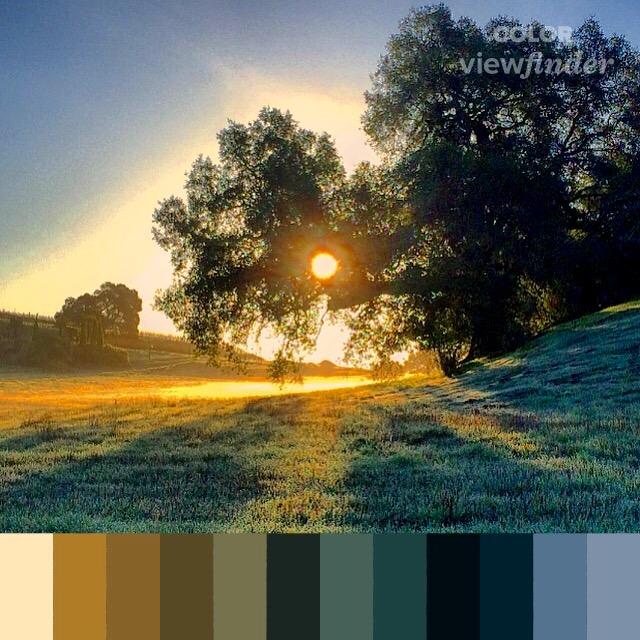 CP - Golden Sunrise.jpg