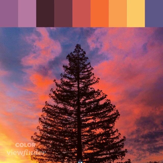 CP - Evergreen Sunset.jpg
