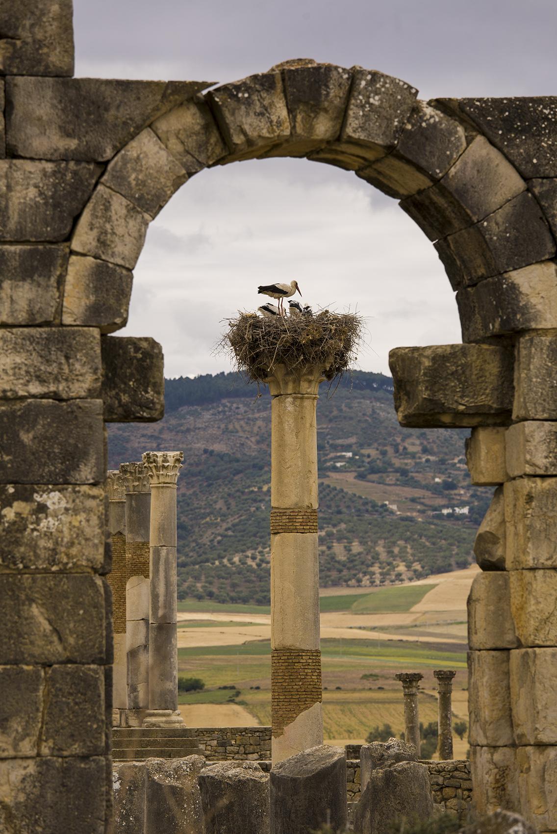 Roman ruins, Volubilis