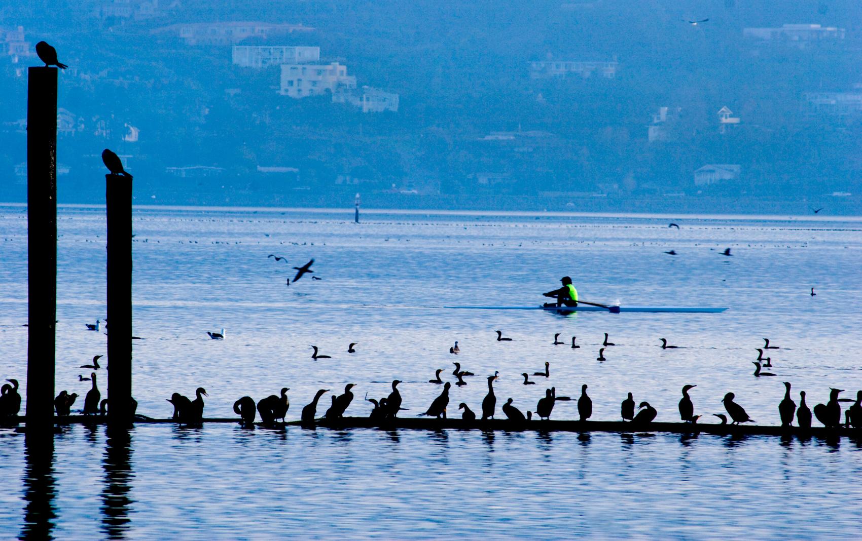 Kayaking off Sausalito