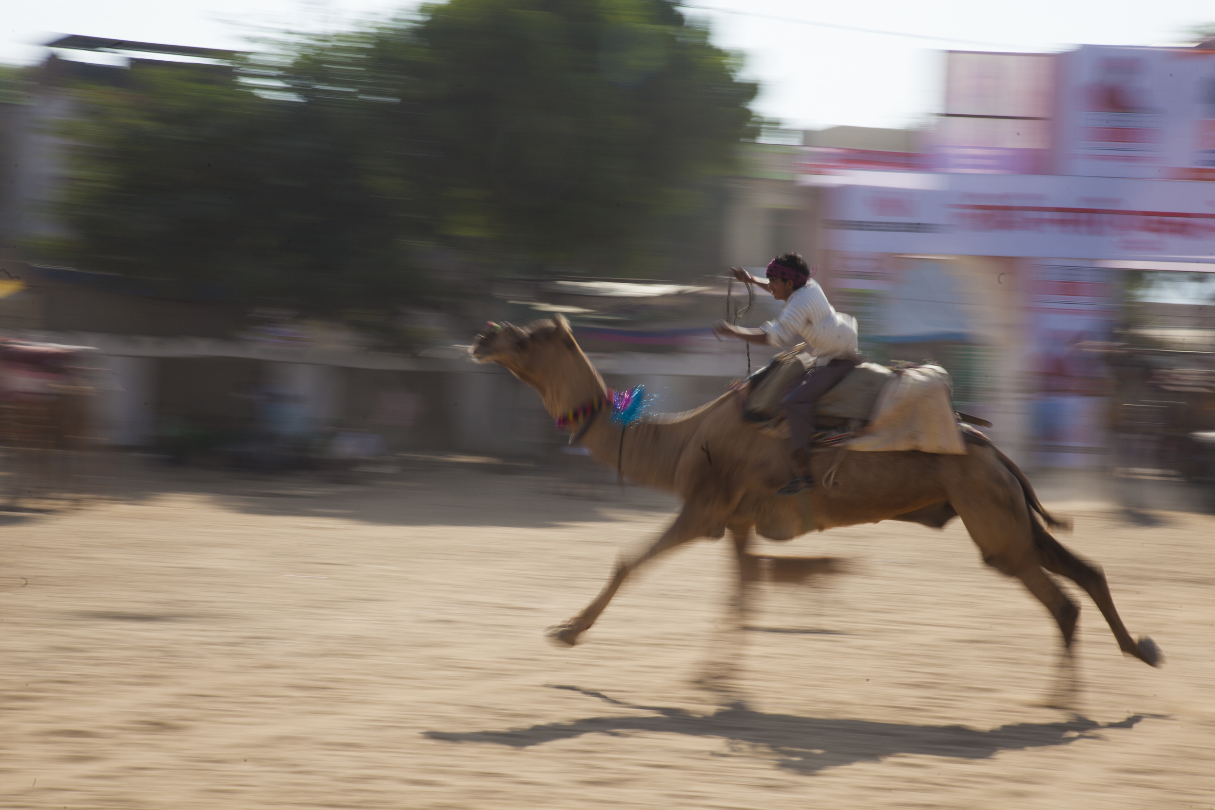 Camel races, Pushkar