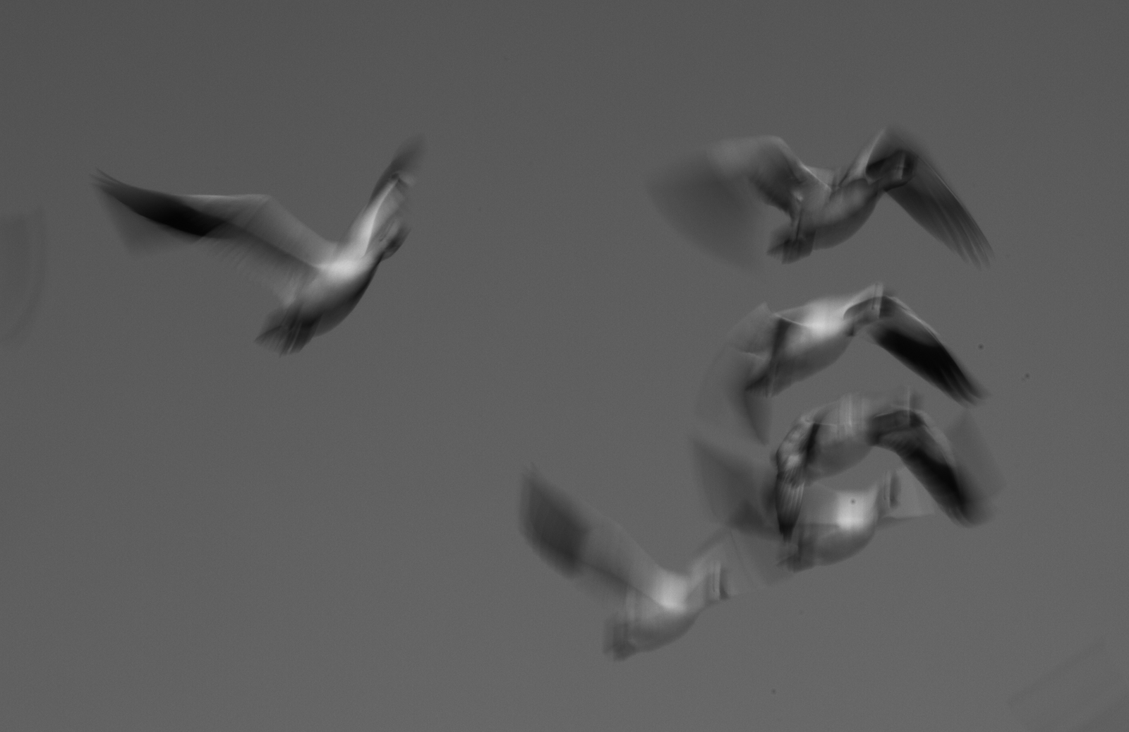 Geese Impressions