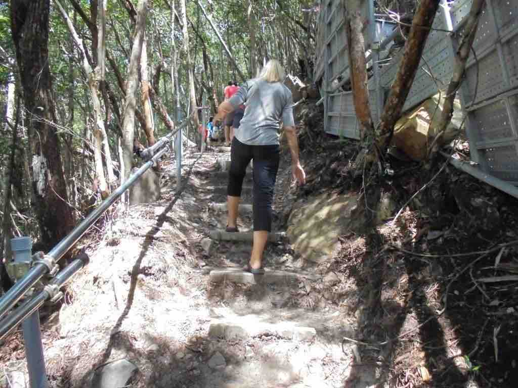 Temporary jungle trail to reach Sky Bridge