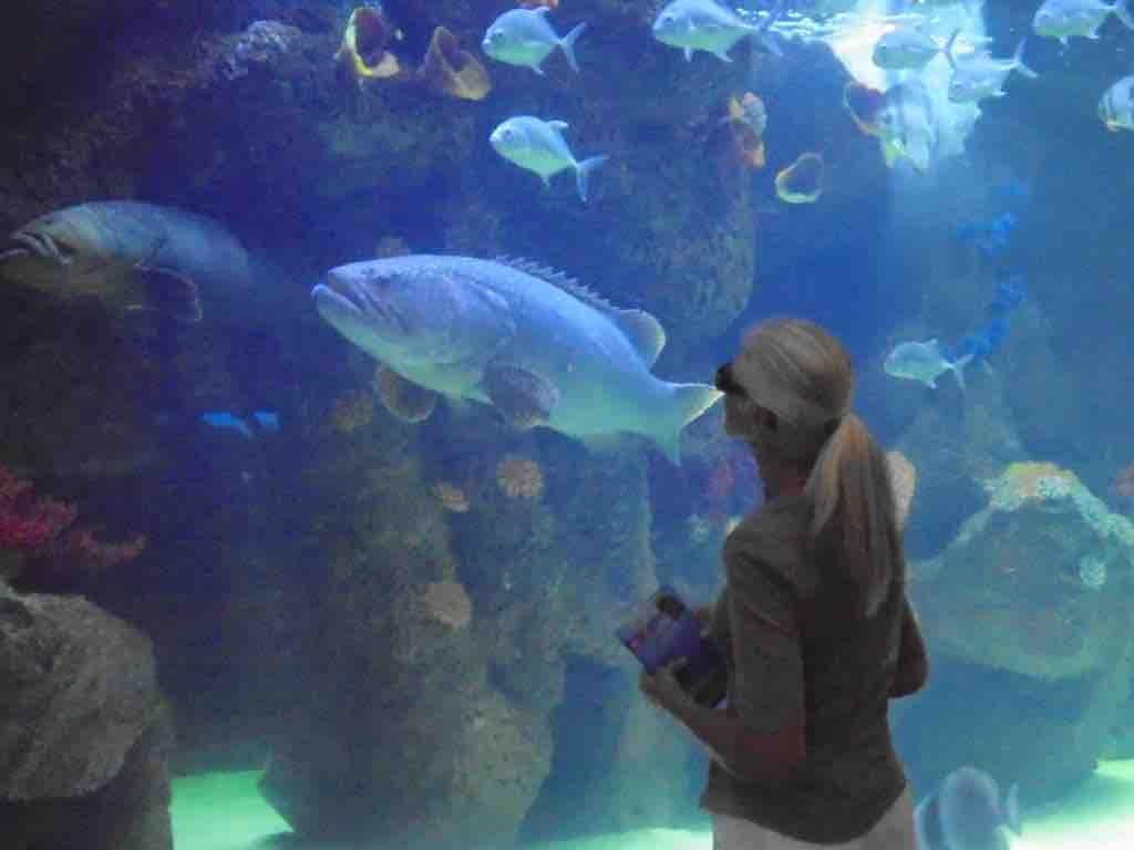 The Shore Oceanarium
