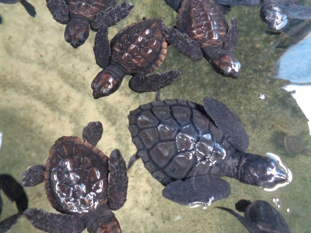 Baby turtles ready to fly