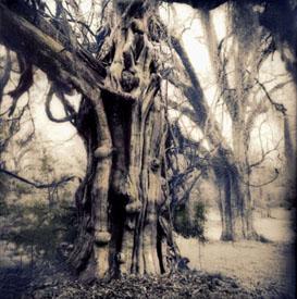 Aged Trees copy.jpg